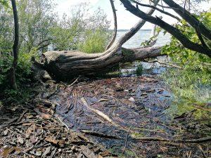Fließendes Holz in wogenden Mustern und einer 'liegend' stehenden Welle...
