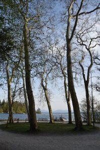 Hier noch einmal die tanzenden Platanen aus dem See zugewandter Perspektive