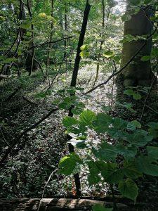 Silberfluss in Waldes-Spiegelungen