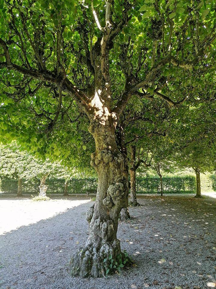 Maßlos schön, auch durch jede einzelne Blatt-Facette. Ein Baum wie eine Tiffany-Lampe