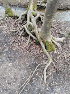 Was wissen wir schon über das Liebes-, Beziehungs- und Empfindungsleben von Bäumen?!